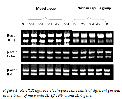 Biomedical-Pharmaceutical-PCR-agarose