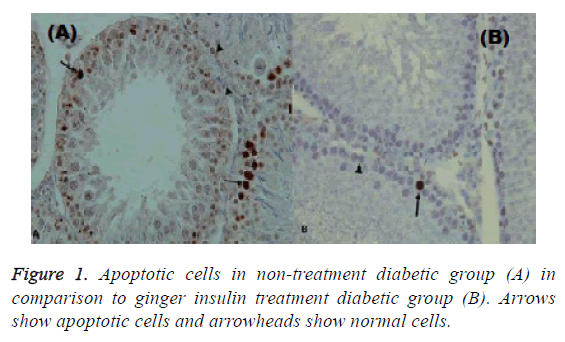 biomedical-pharmaceutical-apoptotic-cells
